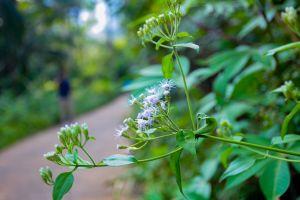 wildflowers flower road