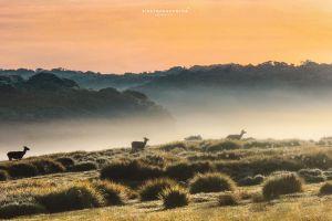 wildlife photography misty dawn wildlife foggy morning