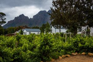 wine mountains wine farm country home nature photography country garden nature farm