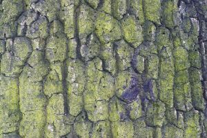 winter nature tree bark with lichens tree trunk close-up