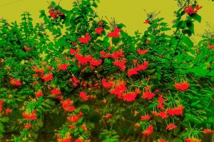 wonderful tree dhaka beautiful flower bangladesh village flower
