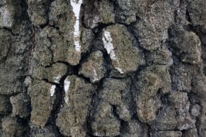 wood nature texture grunge background forest bark tree cracked rough