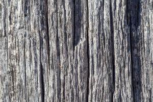 woodgrain bark tree texture nature