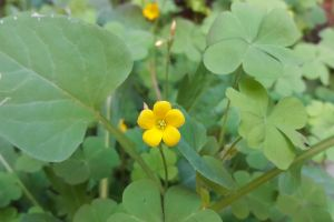 yellow flower greenery natural flowers