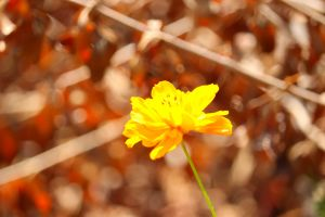 yellow flower saturation