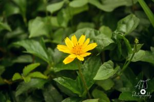 yellow flowers beautiful beautiful flowers