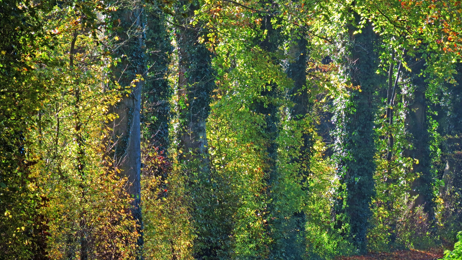autumn trees woodland englishgh seaside trees
