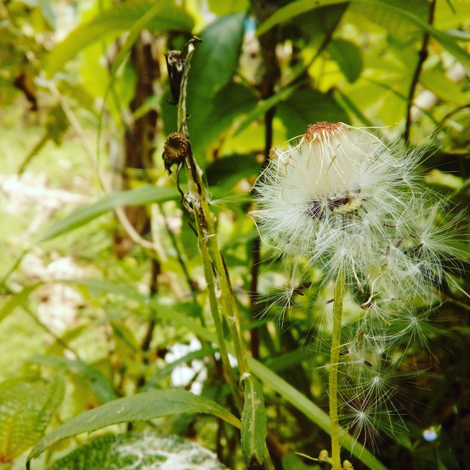 flower hill artificial flowers macro auto focus blue mountains macro photography macro photo beautiful flowers