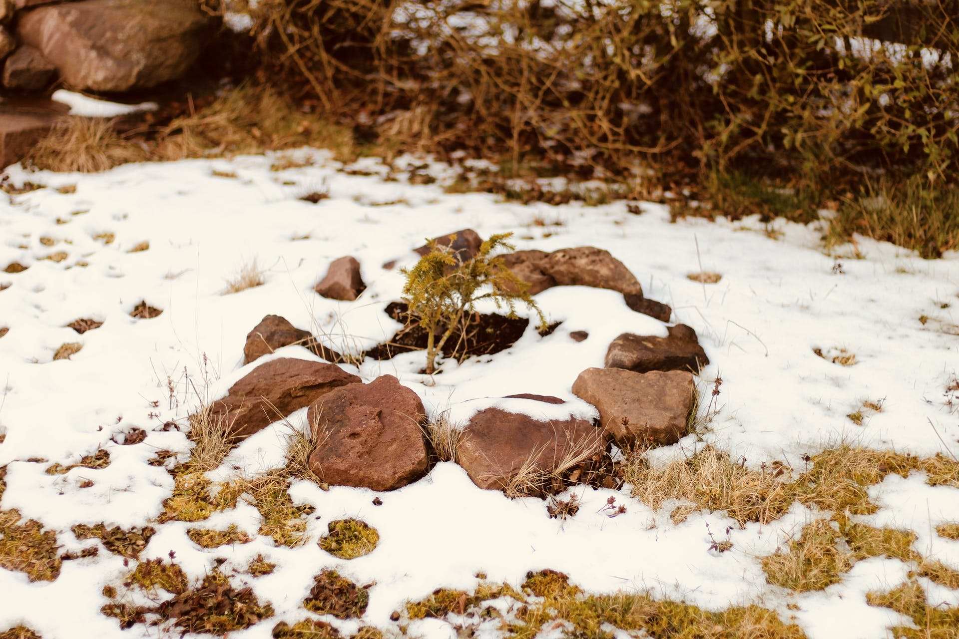 green cold pine stones snowy small winter