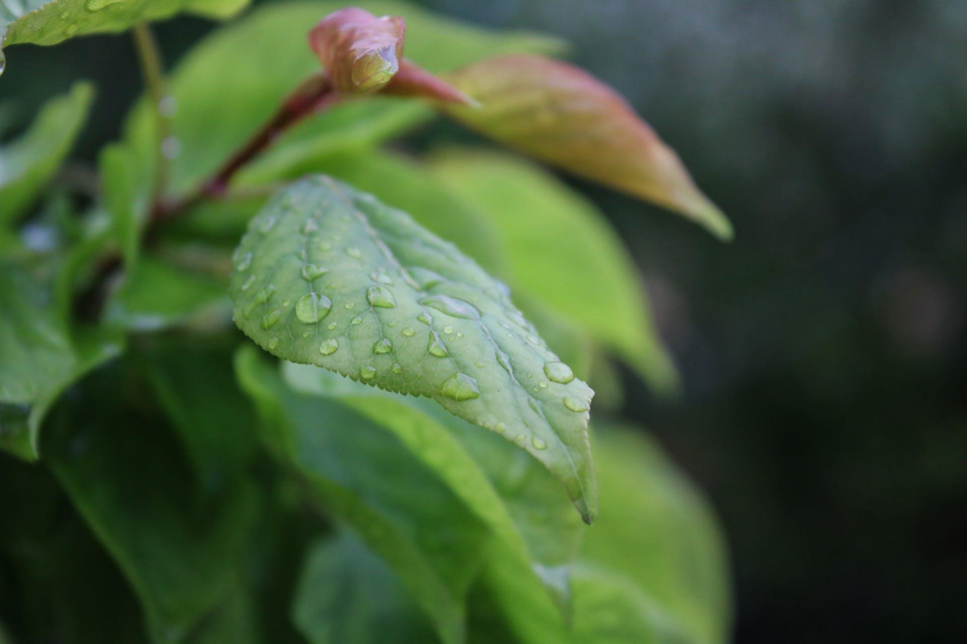 rain color water wet environment plant raindrops garden macro drop
