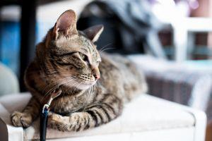 adorable animal tabby pet mammal kitty feline cat cute