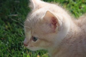 adorable pets whiskers cats cat cute serious cats kittens kitten friendly