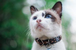 animal pet adorable feline little kitty domestic cat cute cat