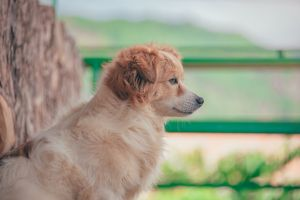 animal photography fur focus pet depth of field snout canidae blur animal breed