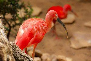 animal photography zoo wildlife macro animal feathers