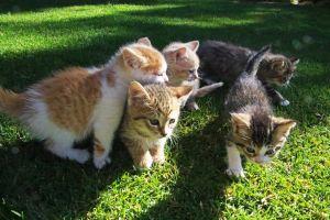 animals cats serious cats friendly furry cat kitten fur pets cute