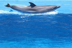 animals dolphins blue holiday blue ocean splash aquarium fish fun dolphin