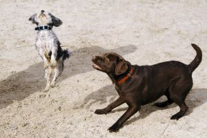 animals jumping dogs mammal adorable canine cute pets portrait playful