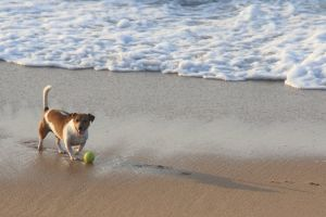 animals play dog holiday friends ocean nature dogs man's best friend pet