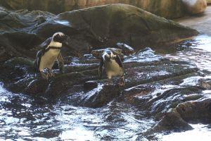 animals sea ocean ocean animal cute aquarium penguin