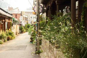 architecture pavement summer windows plants building road town city garden