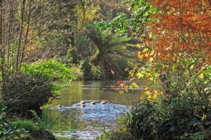 autumn trees ducks landscape trees riverbank