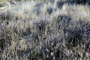background dry phoenix wilderness texture desert shrub sonoran desert arizona grass