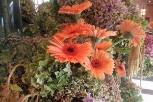 background flowers nature garden