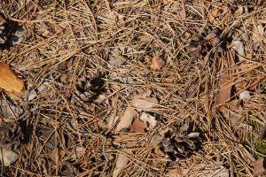 barren land sand dust ground grunge dirty desert dry texture