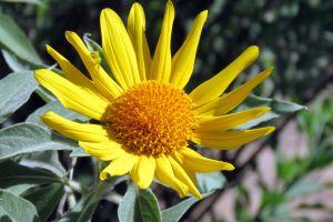 beautiful flowers flower bug