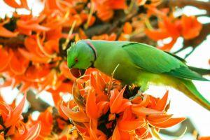 beautiful flowers winter landscape beautiful parrot