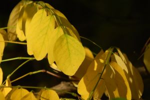 beauty orange foliage gold yellow garden season brown bench park