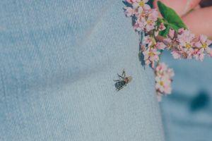 bee nature wild flowers flora little daylight wildlife person blur