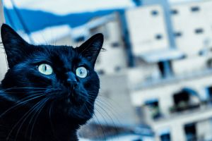 black cat blue building cat
