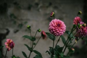 blooming beautiful flower flora color petal