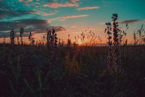 blossom environment sun plants clouds landscape grass dark green evening flowers