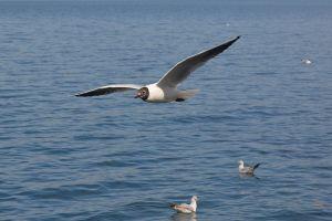 blue grey water birds adventure by the sea free beautiful