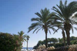 blue palm sky summer palms