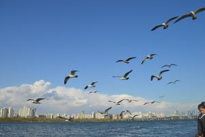 blue sea wings flight sky freedom seagulls water ocean