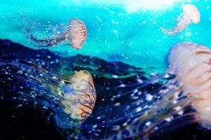 blue water fish free wallpaper underwater hd wallpaper fantasy jelly fish jelly