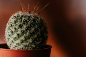 blurred background cactus plant pot indoors blur colors sharp cactus indoor plants round out