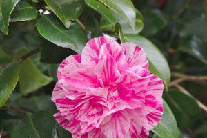 botanique printemps flore nature floraison rose plante pã©tales fleur
