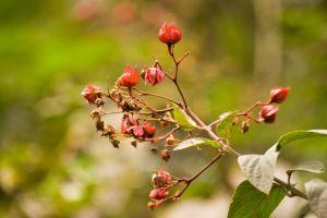 branch colour color growth garden park season flowers close-up blur