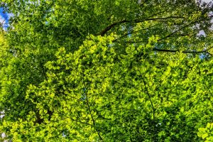 branch forest joy canopy trees colorful nature sky foliage cheerful