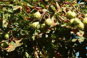 branch tree fresh green background garden chestnut park beautiful plant
