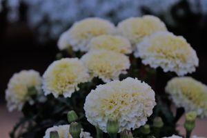 bunch floer flowers bunch of flowers blue flowers