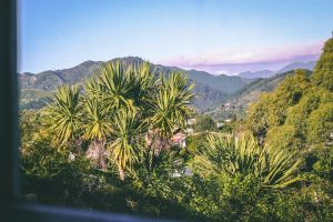 cabbage trees flax window frame mountains trees