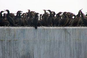 cape town landmark ocean robbin island sightseeing flock of birds concrete waves prison nests