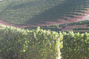 cape town nature wine farm experience mountain