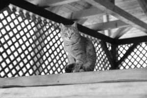 cat black-and-white wall mammal eyes kitten looking pet whiskers street